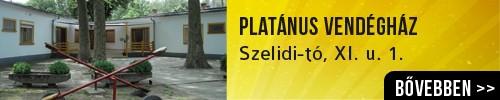 platánus_